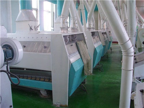 Corn Golden Rice Production Line